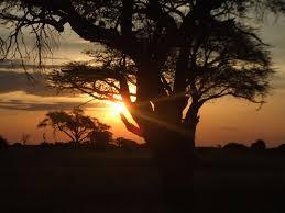 Botsvana sbor
