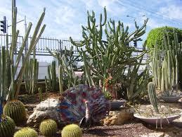 Sad kaktusov