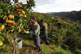 Ital frukt